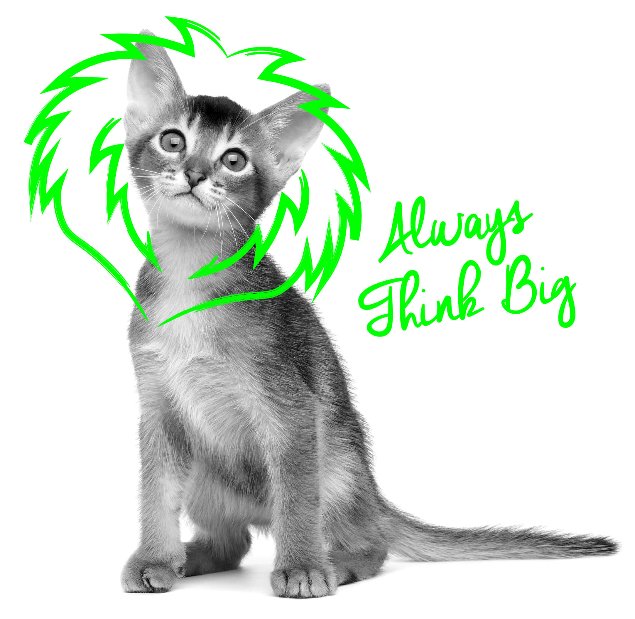 ThinkBig_Cat_aw copy.jpg